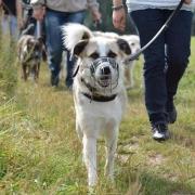 Hundeschule Hundepension Jana Schreyer