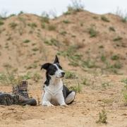 Hundeschule Sibylle Günner