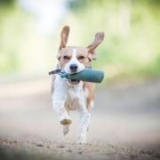 Hundeschule Gassi-Service Michelle Dethling