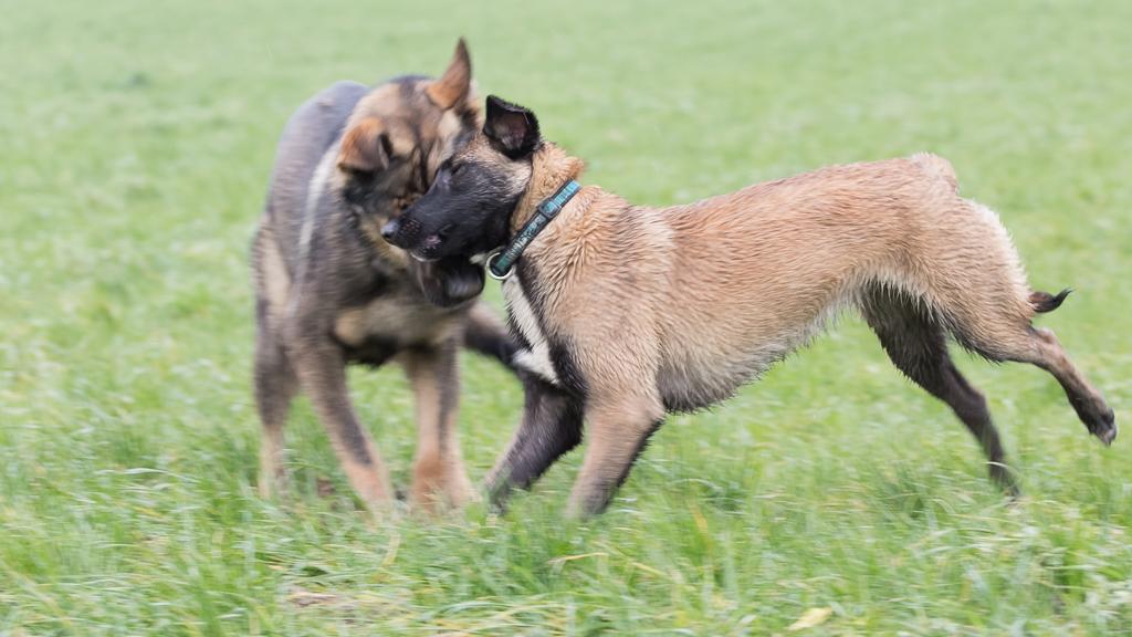 Seminar pubertierende Hunde