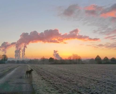 Hund steht auf einem Feld vor dem Rauch aus Fabrikschloten im Abendlicht